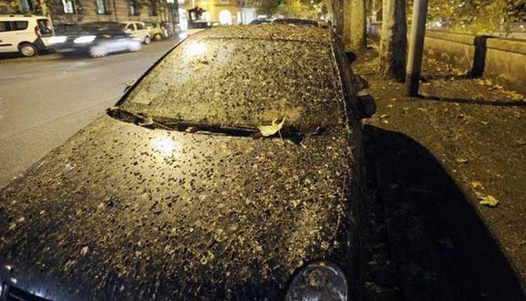 پاک کردن شیره درختان و فضله کبوتر روی ماشین